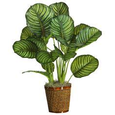 5 växter som inte dör – lättskötta och tåliga krukväxter och blommor för inomhus - kalatea