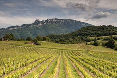 Territoire Dent du Chat - Guides du Patrimoine Savoie Mont Blanc Saint Jean, Rhone, Guide, Vineyard, Outdoor, Mont Blanc, Fine Dining, Outdoors, Vine Yard