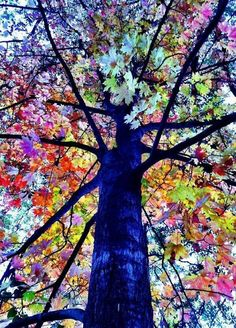 Beautiful Tree The changing of the season lets nature flaunt its beauty. This is what a tree will look like in heaven.all the colors on one tree Should you absolutely love arts and crafts you really will appreciate our info! All Nature, Amazing Nature, Nature Tree, Flowers Nature, Autumn Nature, Amazing Art, Colorful Trees, Colourful Art, Jolie Photo