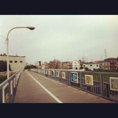 芝川サイクリングロードの橋