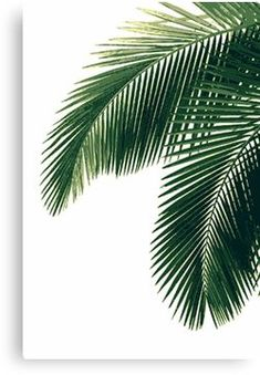 'Tropical Palm Leaves' Poster by