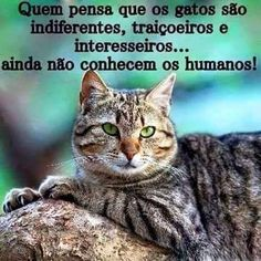 I Love Cats, Cute Cats, Kittens Cutest, Cats And Kittens, Kitty, Humor, My Love, Pictures, Terra