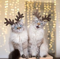 cat deer!!!