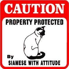 Caution Siamese with Attitude Cat Pet Sign | eBay