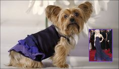 Lily models the Reese Oscar inspired gown at Little Lily in Los Angeles, California February 18, 2008. Pet fashion label Little Lily has designed a range of dog clothes inspired by the actual gowns worn by A-listers on the Oscar red carpet.