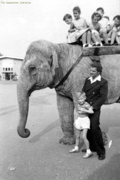 Elephant rides, Belle Vue 1960, Manchester. Shirley Baker, Zoological Garden, Elephant Ride, Manchester Uk, Derbyshire, My Heritage, North West, Elephants, Old Photos