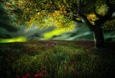 Spring Colors by Vitor Santos on 500px