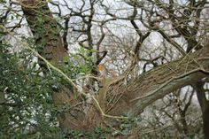 Little Robin in our local woods,it's always fun exploring different areas that you've  never been around before