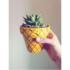 Pineapple Succulent