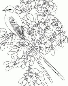 Click To See Printable Version Of Mockingbird And Iris Tennessee
