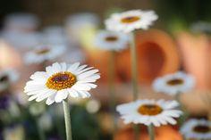 Přírody, Květina, Rostlin, Pružina, Květiny, Zavřít