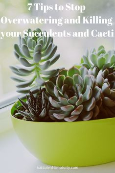 7 Tips to Stop Overwatering and Killing your Succulents and Cacti – Succulent Simplicity 7 Tips to S Succulent Gardening, Succulent Care, Succulent Pots, Planting Succulents, Gardening Tips, Indoor Succulents, Organic Gardening, Watering Succulents, Succulents Drawing