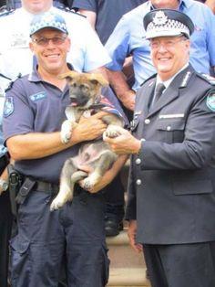 Ένας γερμανικός ποιμενικός με το όνομα Gavel, προοριζόταν να γίνει αστυνομικός σκύλος. Οι εκπαιδευτές του όμως είχαν άλλη άποψη. Από την πρώτη τους επαφή είδαν πως ο Gavel δεν θα μπορούσε να δείξει πουθενά το σήμα του με πυγμή σε μια πιθανή σύλληψη. Αντ' αυτού υποστήριζαν με σιγουριά πως θα έδειχνε την… κοιλιά του στον οποιονδήποτε εγκληματία αφού ήταν ναζιάρης και λάτρευε τα χάδια στην κοιλιά! Το μόνο του ενδιαφέρον ήταν να κάνει τούμπες και να παίζει παρά να στέκεται προσοχή ως σοβαρός κι…