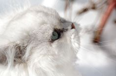 Snow cat by Fohat.deviantart.com on @deviantART