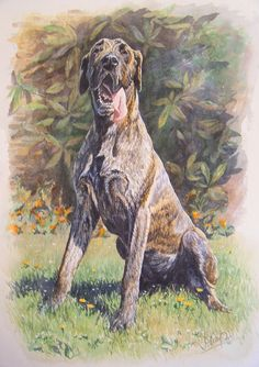Great dane, watercolour.