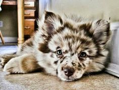 5 Dogs with most amazing fur | The Pet's Planet