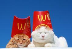 Kittens So Cute - Funny Cats I Love Cats, Crazy Cats, Cool Cats, Animals And Pets, Funny Animals, Cute Animals, Cat Hat, Here Kitty Kitty, Cat Memes