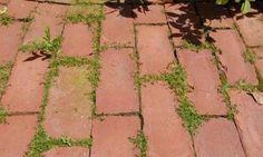 Solution Bio contre les mauvaises herbes!