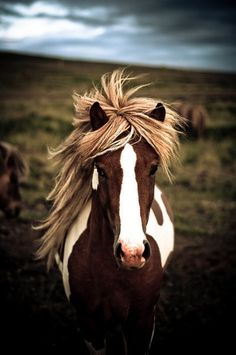 beautiful paint horse | my first love was a paint mare that I named Sassy Jo