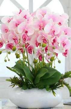 Clique e assista o vídeo. ——————————— Orquídea, orquidea, orquideas, or… – Orchidee
