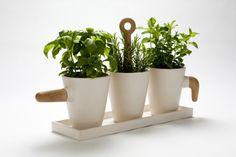 Cristina Toledo- Kitchen Herb Pot