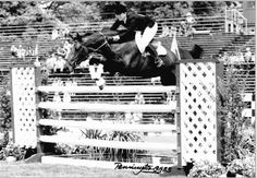 Beezie Madden wasn't always the ultimate professional horseman. In 1983, she showed Storytime to the amateur-owner jumper division championship at the Motor City Horse Show