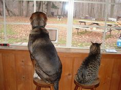 If we had stools/windows like this I'm pretty sure Jackson and Remy would do this everyday