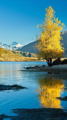 New Zealand Autumn tree reflected in Lake Wanaka. Mt Aspiring in the background, South Island, New Zealand you can find similar pins below. Natur Wallpaper, Beautiful World, Beautiful Places, Landscape Photography, Nature Photography, Landscape Photos, Lake Wanaka, Photos Voyages, Autumn Trees