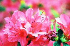 Morning rain on blossoms