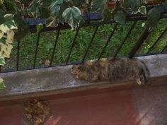 Cat chilling out on balcony