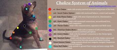 Chakra system for animals and pets