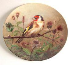Tirschenreuth Distelfink Zweig Unsere kleine Vogelwelt Goldfinch on branch