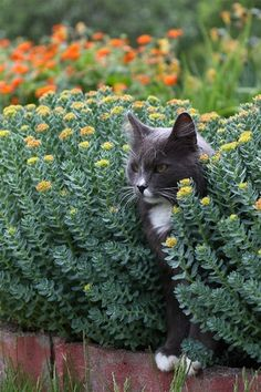 every garden should have a cat   :)
