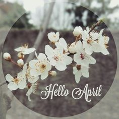 Hello April April Images, Neuer Monat, April Quotes, Hello March, Happy New Year Greetings, Wallpaper Backgrounds, Spring Backgrounds, Wallpapers, New Month