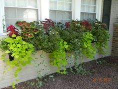 FYI- My easy care summer window box after just 6 weeks! Just plant and water----check out my video to see. Screendoorgirl 3.