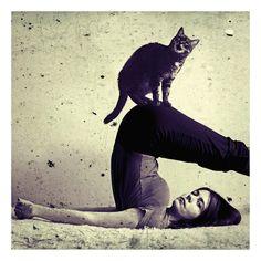 Cat Yoga!