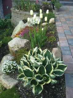 Beautiful front yard rock garden Landscaping Ideas # Landscaping … # Ideas # Landscape # Landscaping - All About Front Garden Landscape, Garden Planning, Beautiful Gardens, Front Yard Landscaping, Landscape, Landscaping With Rocks, Rock Garden Landscaping, Plants, Urban Garden