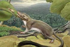First Ancestor of All Placental Mammals