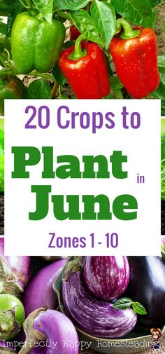 Tips For Gardening Summer Gardening! 20 Crops You Can STILL Plant in June - Zones 1 - - What to plant in June in your vegetable garden for ALL Zones, 1 - Have an awesome summer garden this year with this simple planting guide. Garden Types, Organic Vegetables, Growing Vegetables, Organic Plants, Growing Herbs, Compost, Gemüseanbau In Kübeln, Container Gardening Vegetables, Home Vegetable Garden