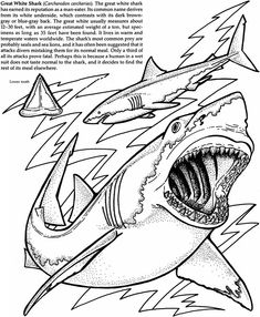 Free Kids Coloring Pages & Cards: Great White Shark - Kids Printable ...