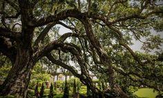 Oaks of Jacksonville FL area.