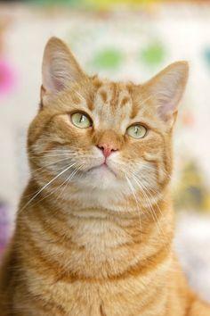 Submission by Monique Laats. Check out Monique's profile: https://www.pexels.com/u/monique-laats-230726/ #animal #pet #eyes