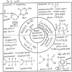 Good organization for Macromolecules - sketch notes - design my own. Biology Classroom, Biology Teacher, Cell Biology, Science Biology, Teaching Biology, Science Education, Life Science, Forensic Science, Physical Science