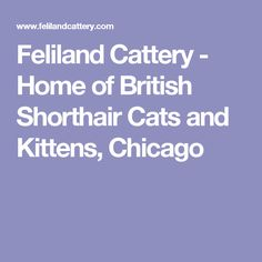 Feliland Cattery - Home of British Shorthair Cats and Kittens, Chicago