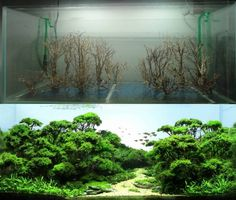 Before and After Freshwater Aquascape