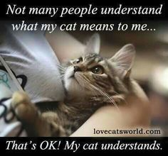 NOT MANY PEOPLE UNDERSTAND WHY MY CAT MEANS TO ME.....THAT'S OK, MY CAT UNDERSTANDS.  They mean the world to me ....my furkids