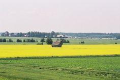 Fields of Ostrobothnia, Finland Helsinki, Finland Summer, Native Country, Homeland, Greenery, Fields, Roots, Scandinavian, Southern