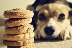 Can Dogs Eat Human Food? Low to High Risk Foods - Animal Bliss Can Dogs Eat Human Food? Low to High Risk Foods - Animal Bliss Easy Dog Treat Recipes, Homemade Dog Treats, Dog Food Recipes, Pet Treats, Diabetic Recipes, Dog Biscuit Recipes, Holiday Cookie Recipes, Best Dog Food, Can Dogs Eat