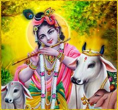 """SHRI KRISHNA GOVINDA ॐ http://careforcows.org/ """"Lord Krishna, the one master and the Lord of the universe, is worthy of being served by everyone. Indeed, everyone is but a servant of His..."""