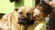 Talk to Dogs Like Babies, Because Studies Show They Like It